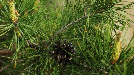twigs, pine cone, green