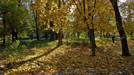 ukraine, dnepropetrovsk, wood