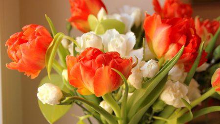 ulips, flowers, flowing