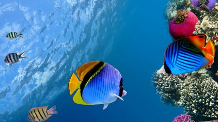 under water, coral, fish