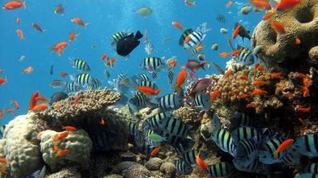 underwater, ocean, fish