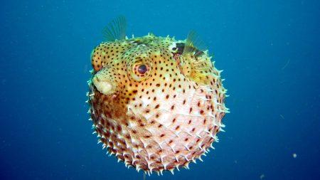 underwater, world, fish