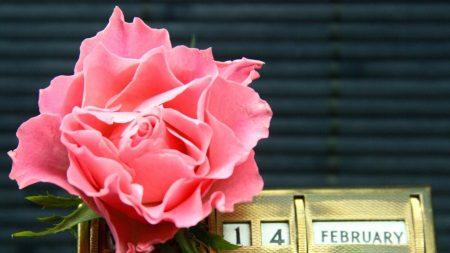 valentines day, flower, calendar