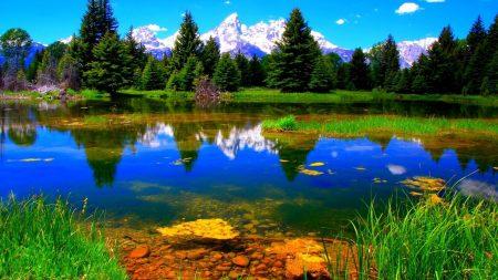 vegetation, lake, green