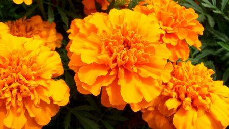 velvet, flowers, bright