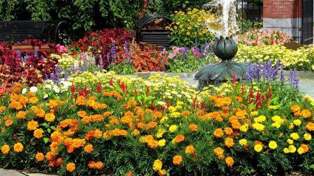 velvet, flowers, flowerbed