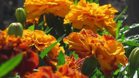 velvet ribbon, flowers, bright