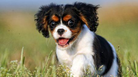 view, dog, puppy