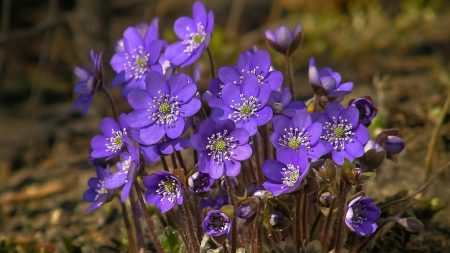 violets, flowers, small
