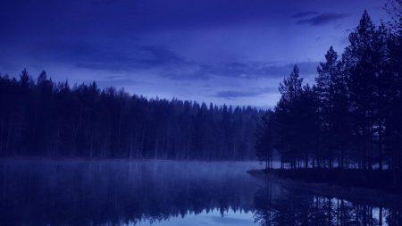 water, forest, beach