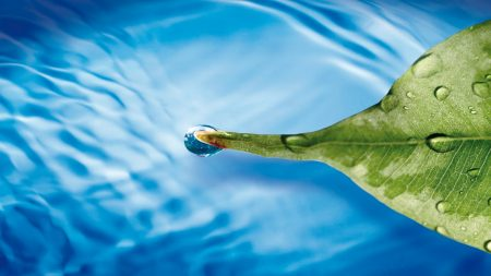 water, leaf, drop