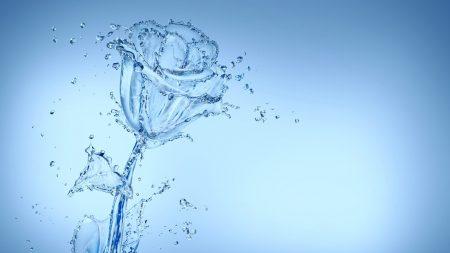 water, spray, flower