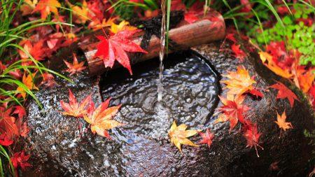 water, stream, leaves