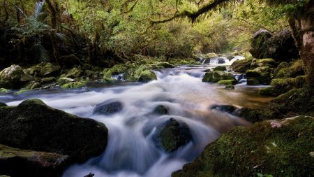 water, stream, river
