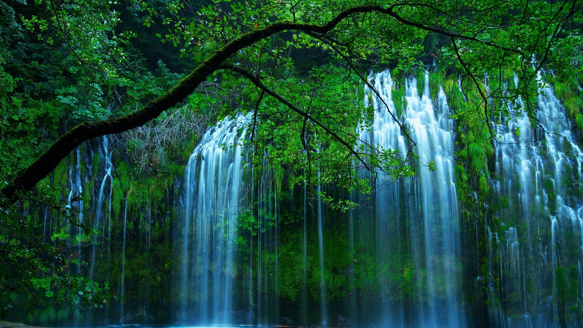Download Wallpaper 1920x1080 Waterfall Trees For Full Hd 1080p Hd Background