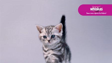whiskas, cat, cute