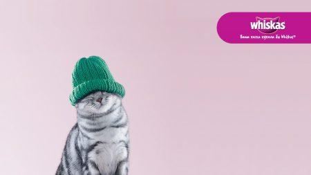 whiskas, cat, hat