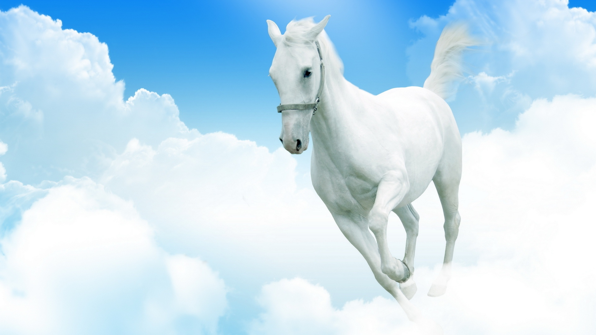 Download Wallpaper 1920x1080 White Horse Clouds Jumping Full Hd 1080p Hd Background