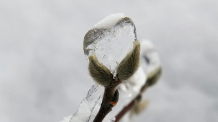 willow, ice, heart
