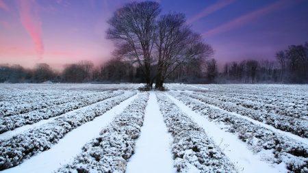 winter, field, ranks