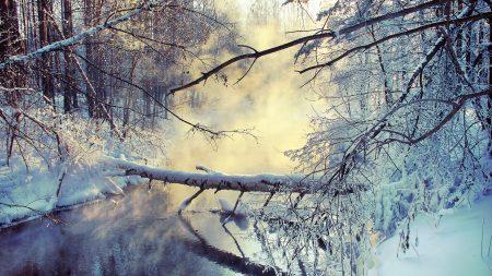 winter, lake, tree