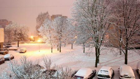 winter, snow, yard