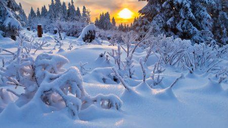 winter, snowdrifts, cover