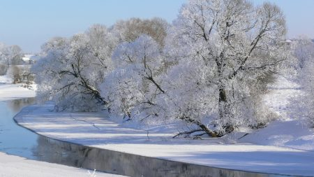winter, trees, river