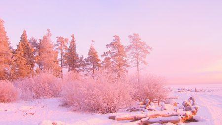 winter, trees, snow drifts