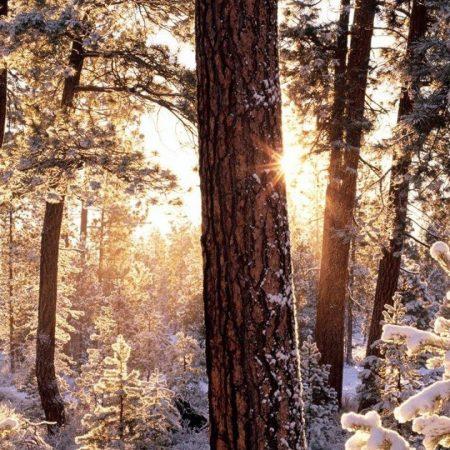 winter, wood, tree