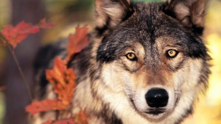 wolf, grass, leaves