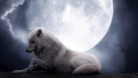 wolf, moon, lie