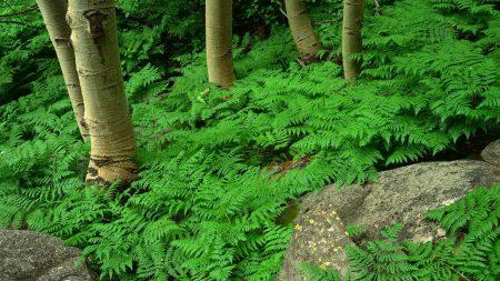 wood, fern, greens
