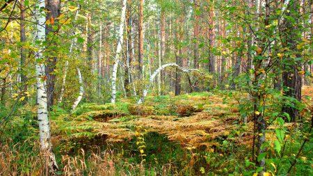 wood, fern, thicket