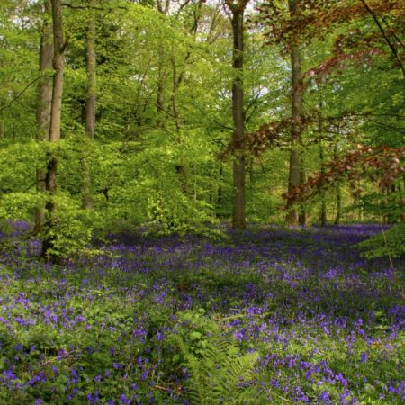 wood, flowers, greens