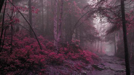 wood, fog, lilac
