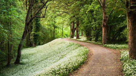 wood, footpath, path