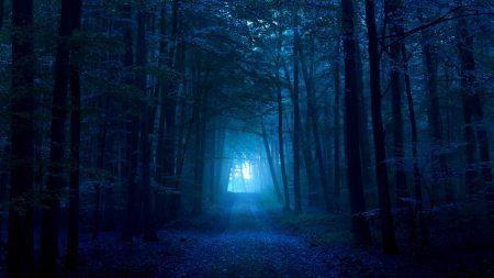 wood, gloomy, light