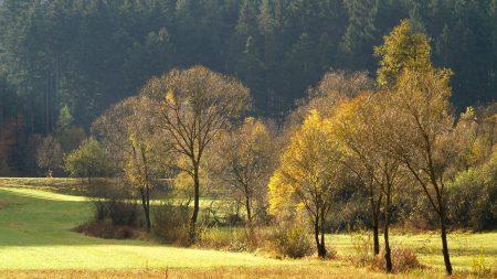 wood, gold, autumn