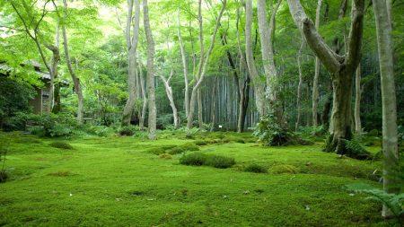 wood, grass, trees