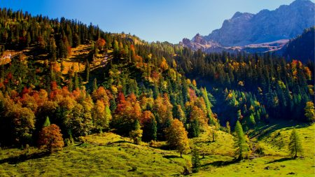 wood, green, mountains