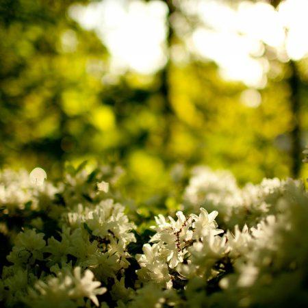 wood, greens, flowers