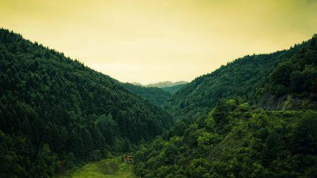 wood, lodge, solitude