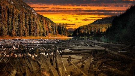 wood, logs, water