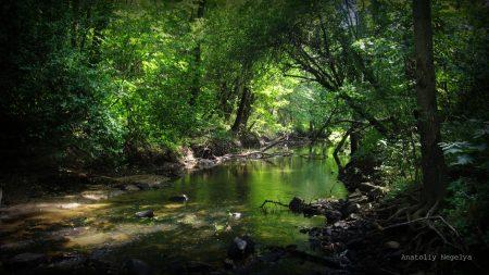wood, river, stones