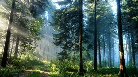 wood, road, beams