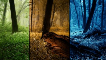 wood, seasons, pictures