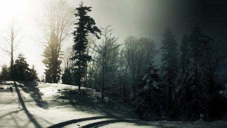 wood, snow, trees