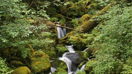 wood, stones, stream