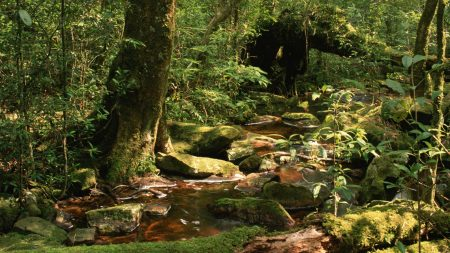 wood, stream, stones